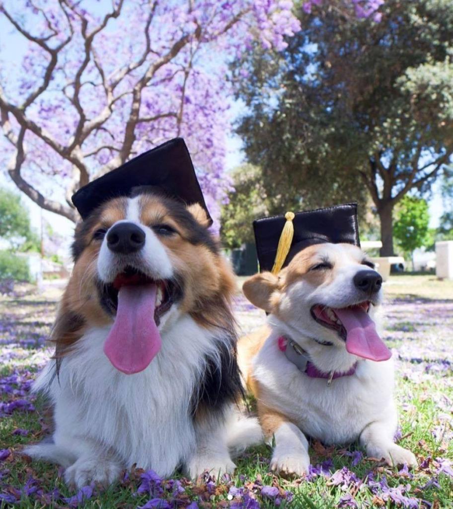 Share the Good News Graduation Dogs