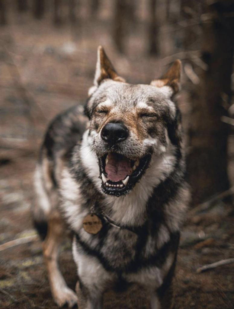 Share the Good News Happy Dog