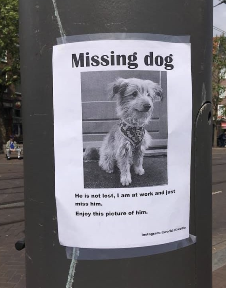 Missing Dog Good News